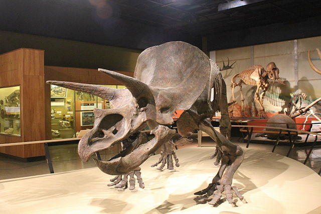 Triceratops at Cleveland Museum of Natural History, Cleveland, Ohio
