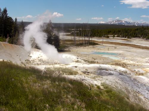 fumaroles in Norris Geyser Basin, Yellowstone National Park, Wyoming
